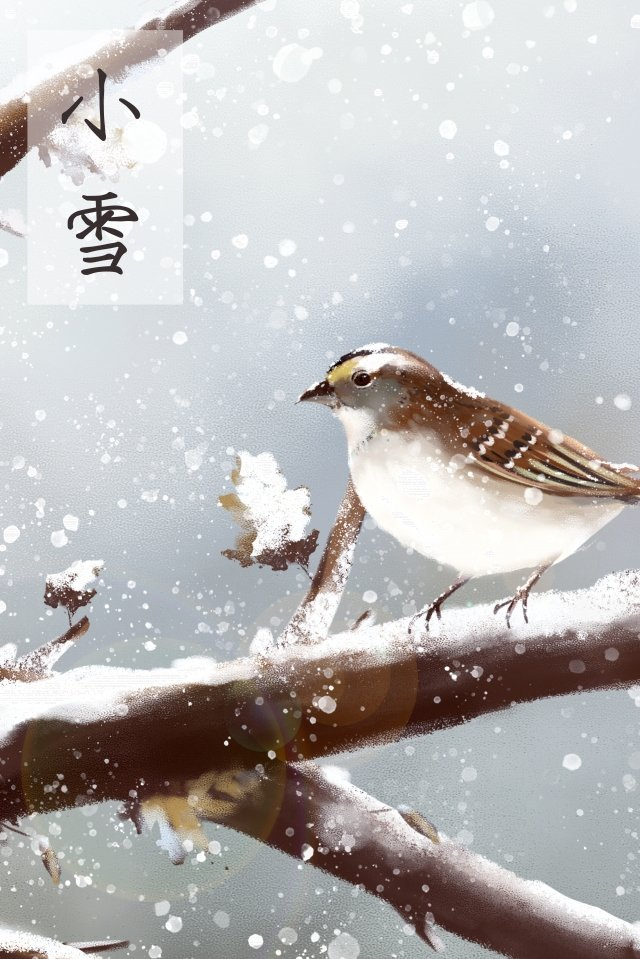 light snow sparrow winter little bird llustration image