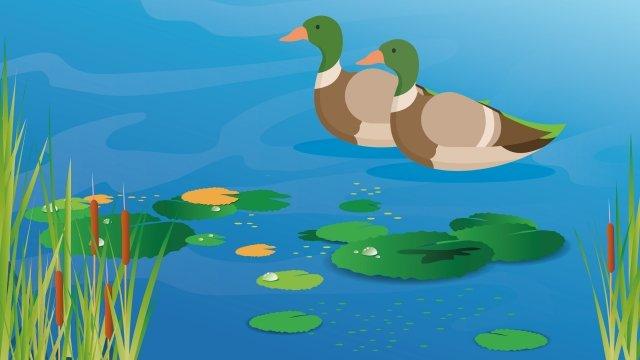 연꽃 연못 물 오리 여름 오리 삽화 소재
