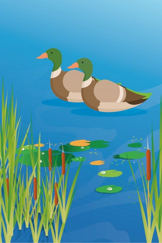 lotus pond water duck summer duck illustration image