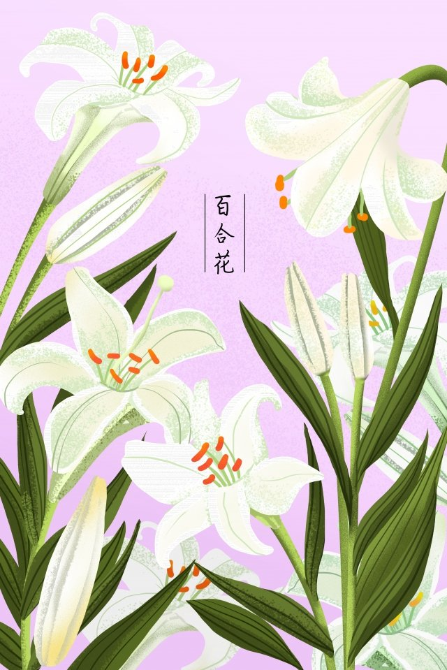 plant flowers flowers flowers, Flower, Lily, Leaf illustration image