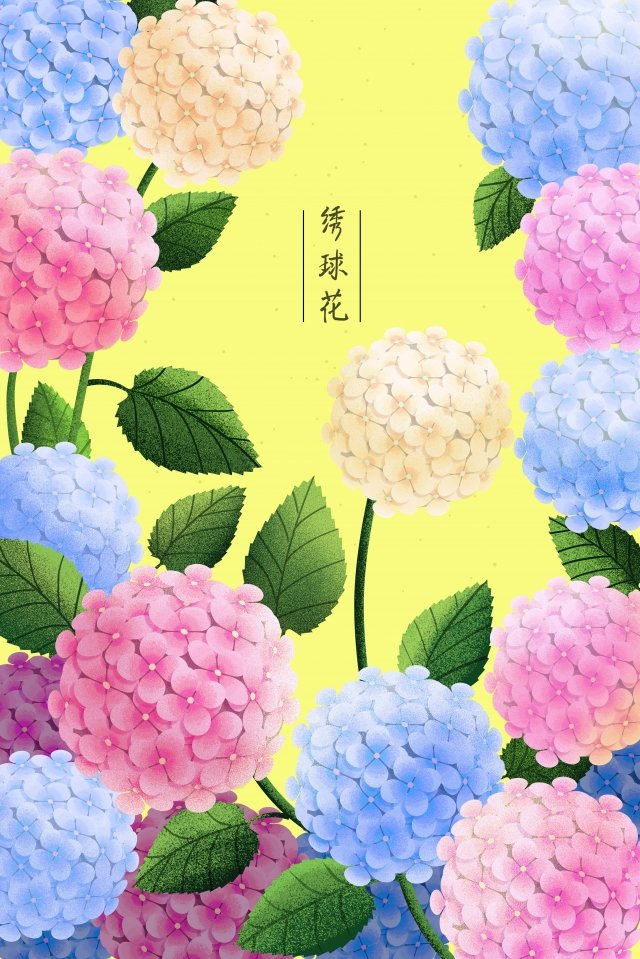 plant flowers flowers flowers, Flower, Hydrangea, Leaf illustration image