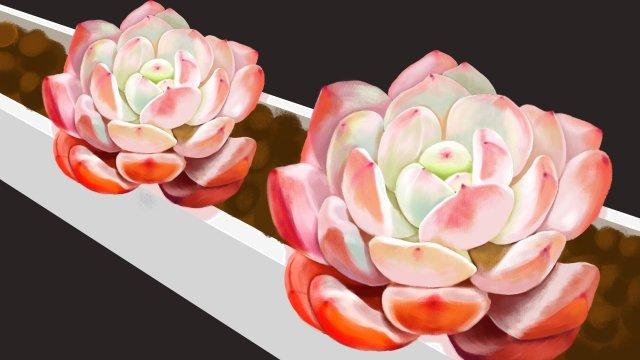 植物多肉植物フラワーポット土壌 イラストレーション画像 イラスト画像