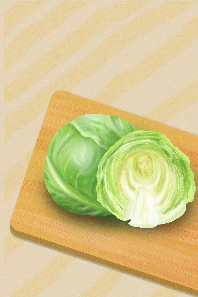 야채 양배추 양배추 음식 삽화 소재 삽화 이미지
