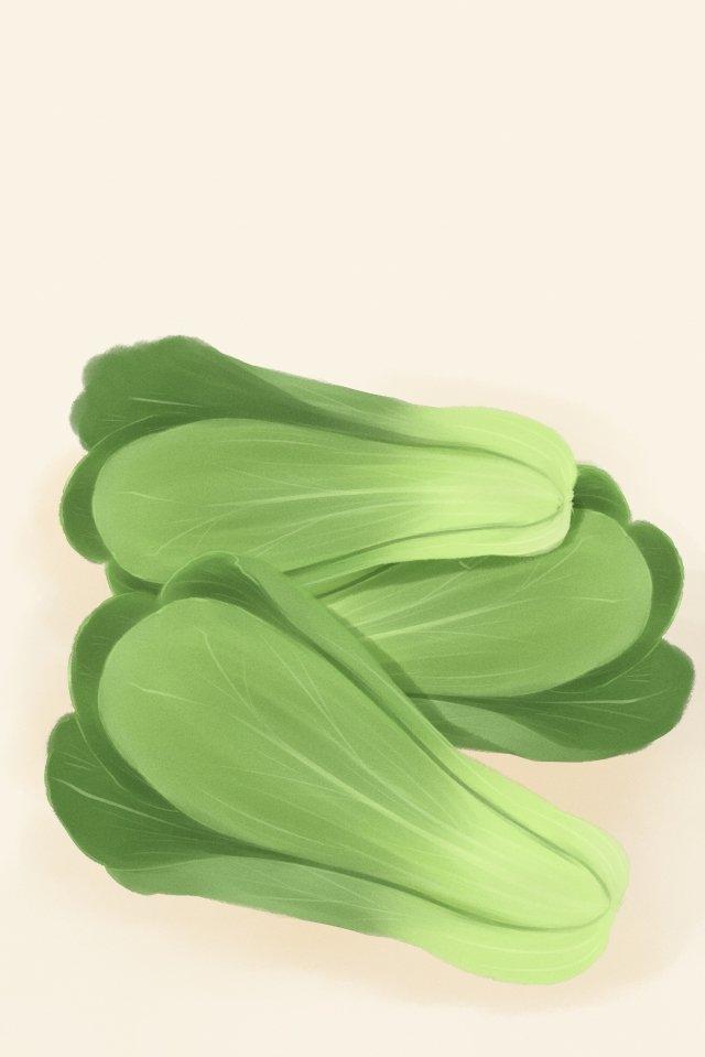 vegetables vegetables shanghai green green llustration image illustration image