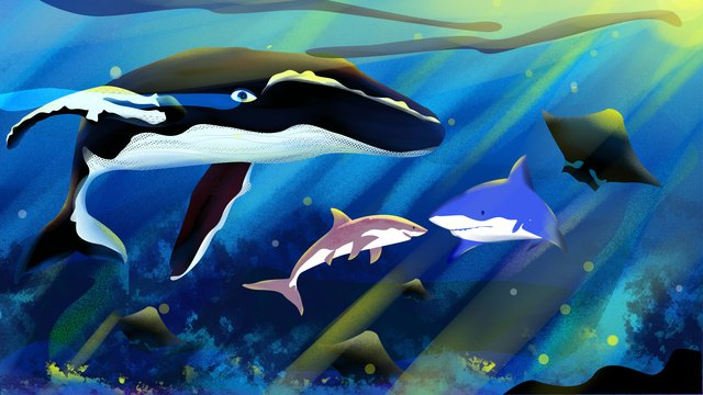 Marine life whale and shark cure department commercial illustration, Marine Life, Whale, Shark illustration image