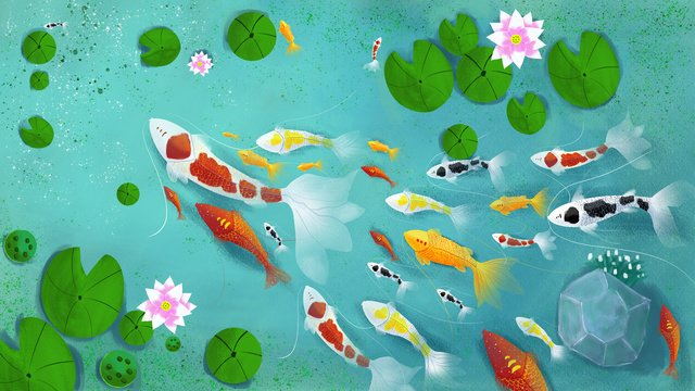 transport koi lotus pond fish group illustration llustration image illustration image