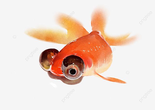 Peixe Peixinho Peixinho Peixinho Peixe Realista Peixinho