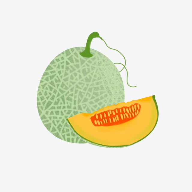 Summer Hand Painted Fruit Whole And Half Cantaloupe With Fujiman Illustration Noise Style Noise Png Transparent Clipart Image And Psd File For Free Download Cantaloupes are also commonly known as muskmelons, mush melons, rock melons and persian. summer hand painted fruit whole and