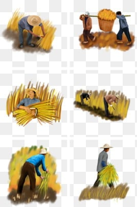 EPS Vector - Rice farmer harvest sickle illustration. Stock Clipart  Illustration gg108051296 - GoGraph