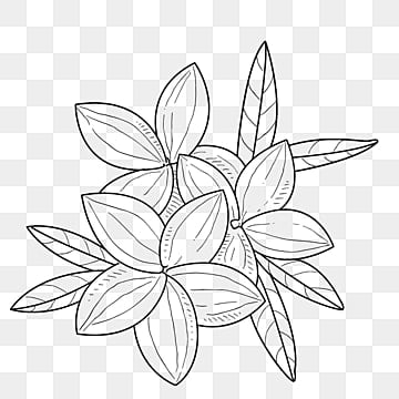 Flower Line Drawing Png Images Vectors And Psd Files Free
