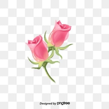 Pink hand-painted twin buds fresh roses, Hand Drawn, Fresh, Rose PNG and PSD