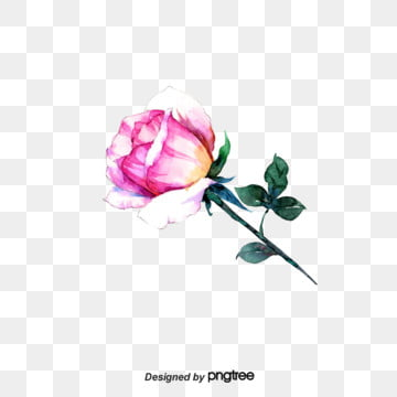 Purple-red hand-painted roses, Leaf, Aestheticism, Arrangement PNG and PSD