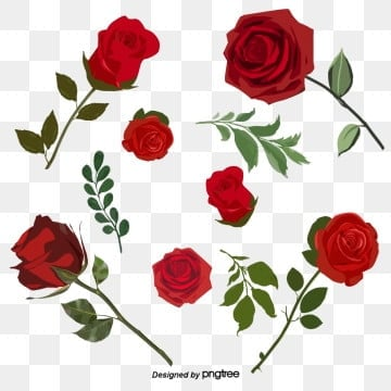 Red Handpainted Romantic Valentines Day Rose Elements, Valentines Day, Valentines Day Roses, Hand Drawn PNG and PSD