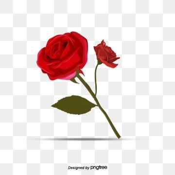 Red Valentines Day Romantic Single Rose Element, Valentines Day, Valentines Day Roses, Hand Drawn PNG and PSD