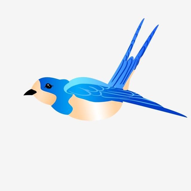 Blue Bird Blue Feather Blue Wings Flying Bird, Cute Bird