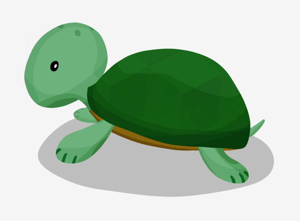 Green Head Green Paw Green Turtle Shell Cartoon Illustration Cute