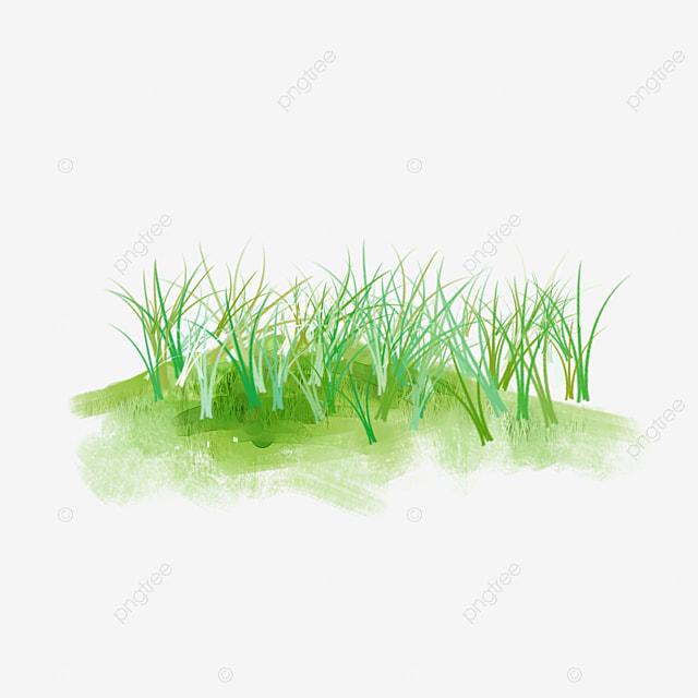 Erva Capim De Pastagem Natural Pintado A Mao Grass Prados Green