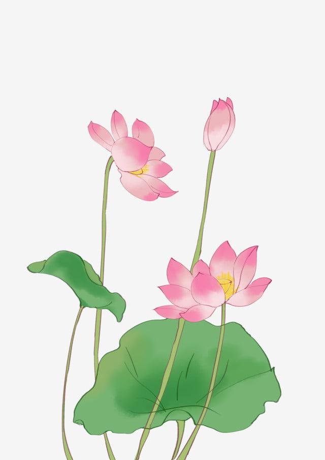 Pink Lotus Blooming Lotus Blooming Lotus Beautiful Lotus Cartoon