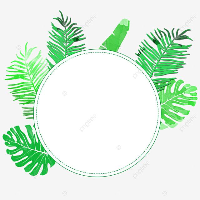 Planta Tropical Folhas Fronteira Bonita Verde Verde Fundo