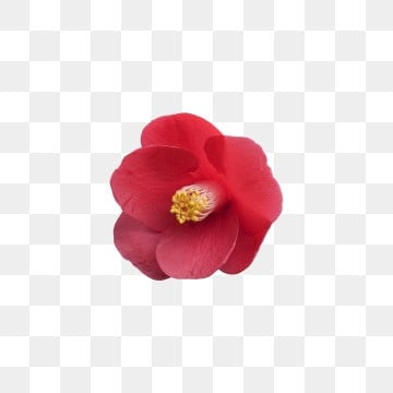 Red Flowers Png Images Vector And Psd Files Free