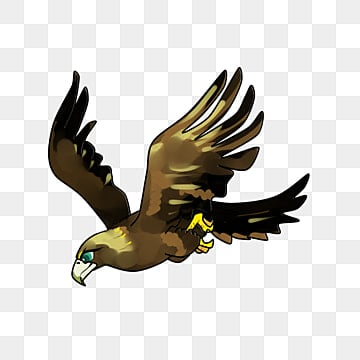 Eagle Png, Vector, PSD, and Clipart With Transparent Background for