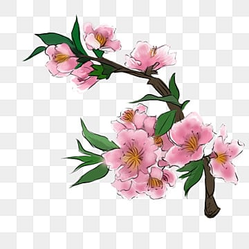 Blush Pink Flowers Png Images Vectors And Psd Files Free