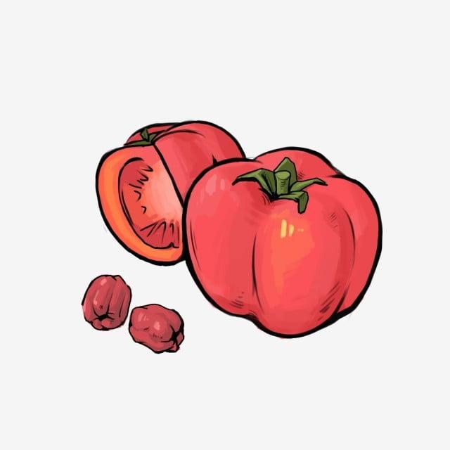 Azufaifa Comida Saludable Tomates Dibujados A Mano Tomate De Dibujos