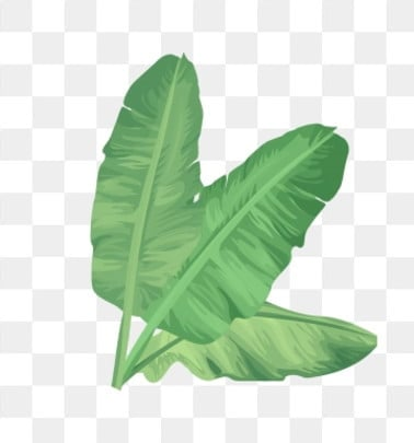 banana leaf png vector psd and clipart with transparent background for free download pngtree banana leaf png vector psd and
