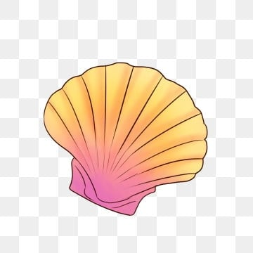 Sea Shell Png Images Vector And Psd Files Free Download On Pngtree