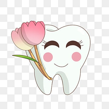 Tooth healthy. Teeth clipart images png