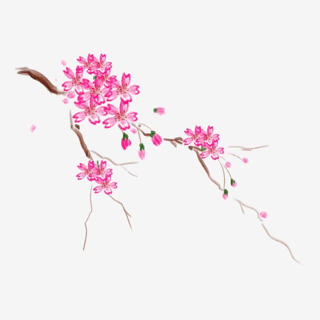 Flores De Cerezo Flotantes Flores Flotantes Planta De Dibujos