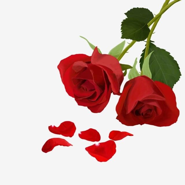 rose rose saint valentin festival saint valentin plante
