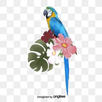 可愛鸚鵡 水彩鸚鵡 動物 鳥類, 橘色嘴, 鳥類, 彩色尾巴 PNG和PSD圖片素材