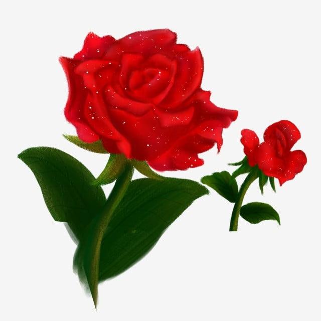 Dessiné à La Main Dessin Animé Rose Rouge Rouge Png De