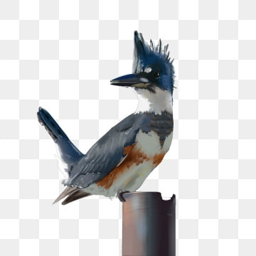 鸚鵡 鳥 動物 精鋼鸚鵡, 鸚鵡鳥動物精鋼鸚鵡鳥, 精鋼鸚鵡, 手繪 PNG和PSD圖片素材