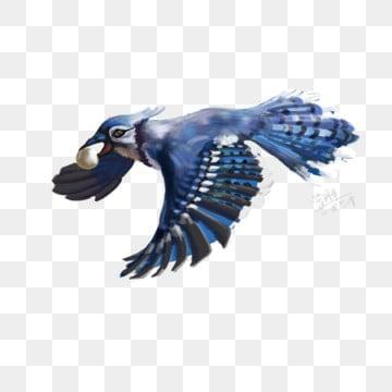 鸚鵡 鳥 飛鳥 鸚鵡, 野生動物, 巴哥, 鳥 PNG和PSD圖片素材