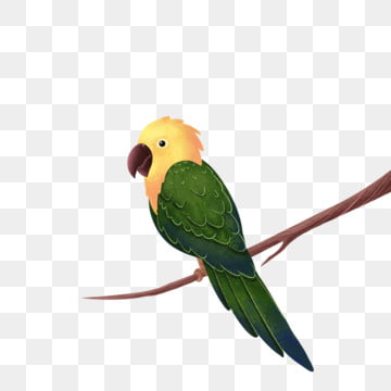 鳥類 鳥 小鳥 鳥兒鸚鵡, 寫實, 生物, 鳥兒鸚鵡 PNG和PSD圖片素材
