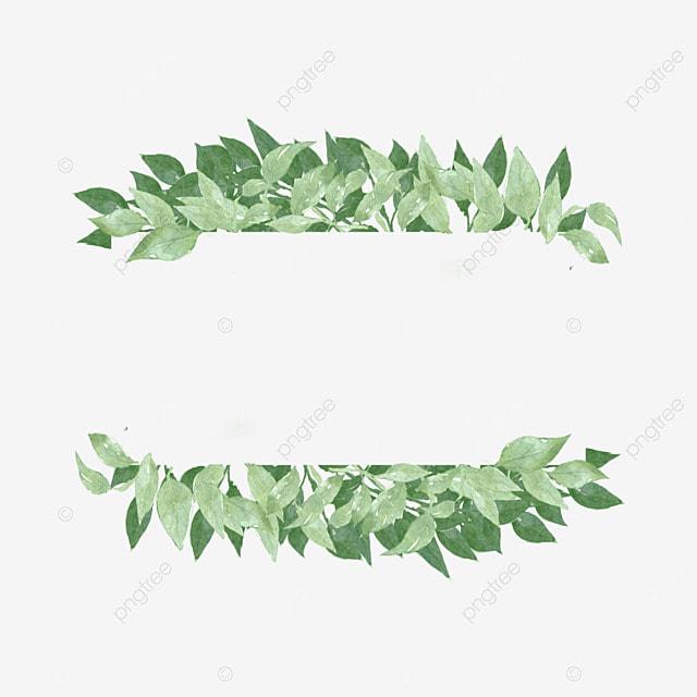 bordure d eucalyptus pale petit eucalyptus fichier png et
