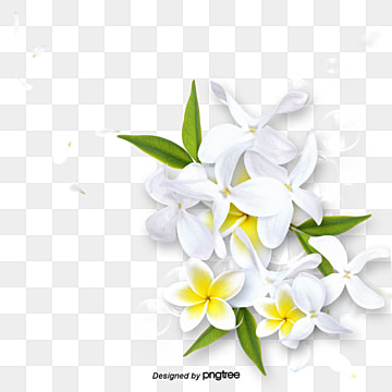 White Flower Png Images Vector And Psd Files Free