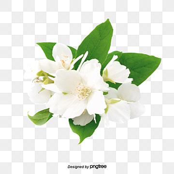 Green And White Islamic Geometry Background Jpg Islamic Design