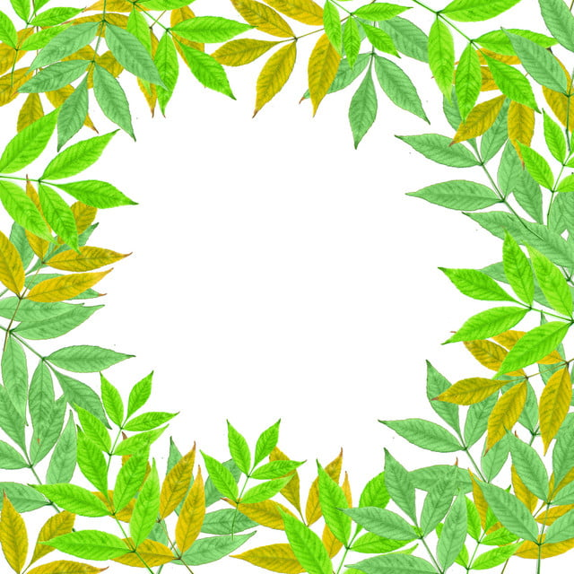 Tropical Leaves In White Background Painting Graphics Design Summer Png Transparent Clipart Image And Psd File For Free Download Hand drawn tropical leaves png transparent background. pngtree