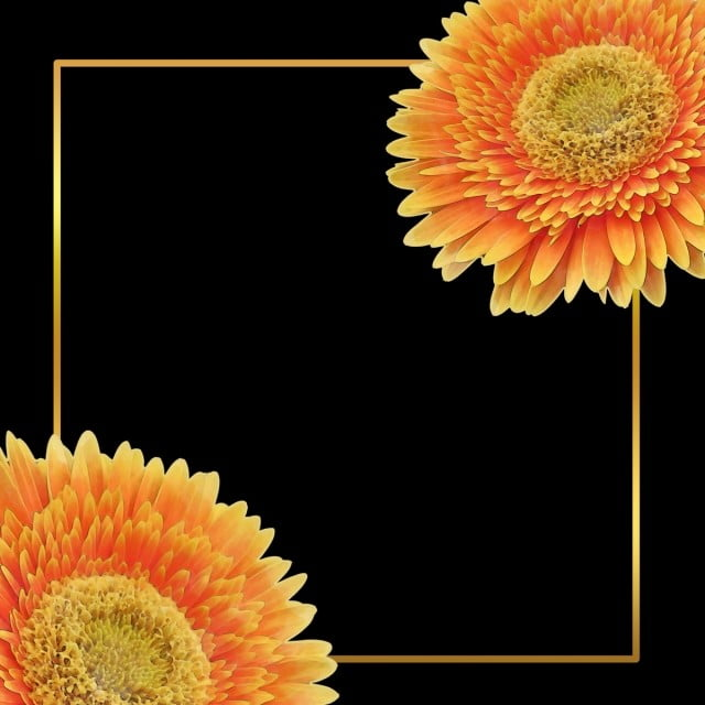 Yellow Flower In Black Background Painting Graphics Design Summer Png Transparent Clipart Image And Psd File For Free Download