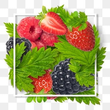 Raspberry and Blackberry leaf decoration frame and border, Background, Vector, Illustration PNG and PSD