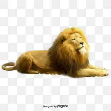 animal  animal  lion king element, Element, Animal, King Of The Forest PNG and PSD