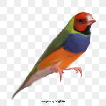 Bird PNG Images, Download 16,202 Bird PNG Resources with