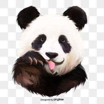 Download 94+ Gambar Panda Galak Terbaru Gratis