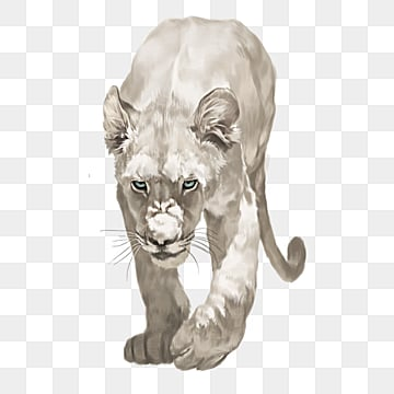 Free Lioness Cliparts, Download Free Clip Art, Free Clip Art on Clipart  Library