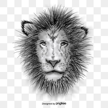 black and white sketch handpainted lion, Ferocious, Animal, Hand Painted PNG and PSD