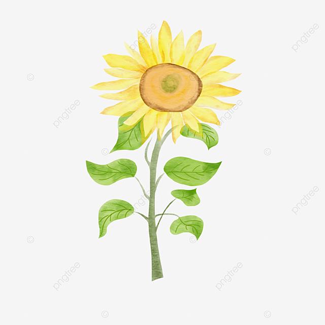 Yellow Watercolor Sunflower Illustration Elements, Sunflower Clipart, Element, Sunflower PNG and PSD