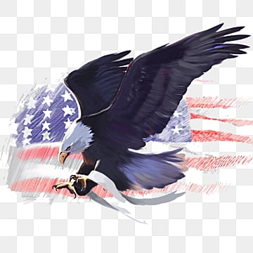 American Eagle  American Flag Eagle  White Headed Sea Eagle Elements, Animal, Country, Badge PNG and PSD